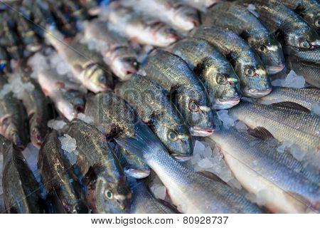 Dorado And Sea Bass