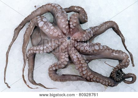 Fresh Octopus On The Ice