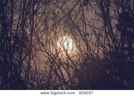 Moon thru the forest
