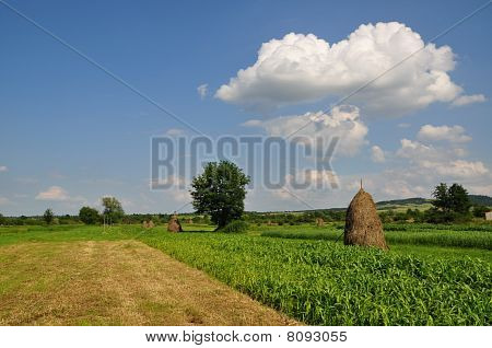 Rural village fence.
