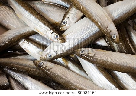 Fresh Fish Smelt