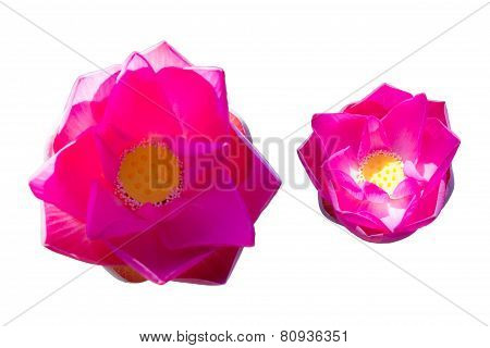 Pink Water Lily Flower (lotus)