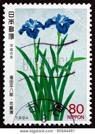 Postage Stamp Japan 1994 Iris, Flowering Plant