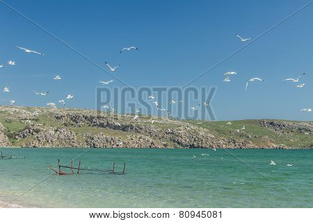Seagulls on the coast of the Sea of Azov