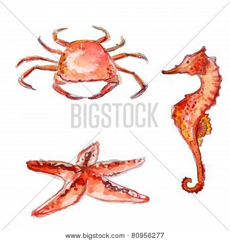 Set of hand drawn watercolor sea creatures. orange crab, starfish and sea horse. Colorful vector ill