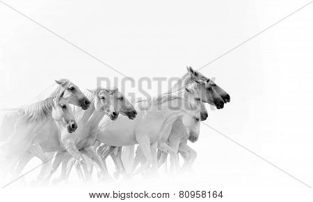 Herd Of Running White Horses