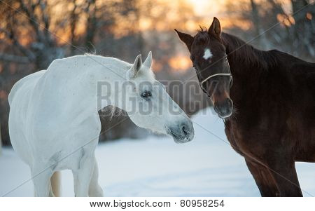 Horses Communicating In Winter