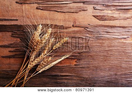 Spikelets of wheat on wooden background