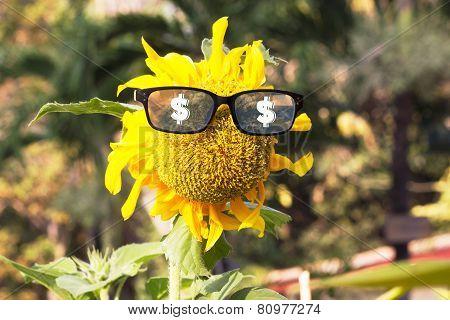 Mister money form sun flower