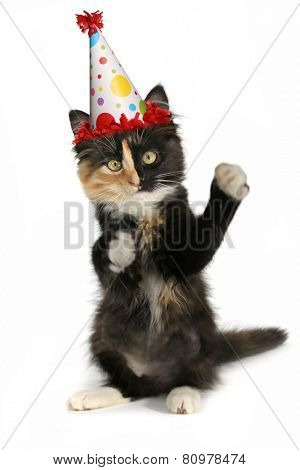 Kitten on a White Background With Birthday Hat