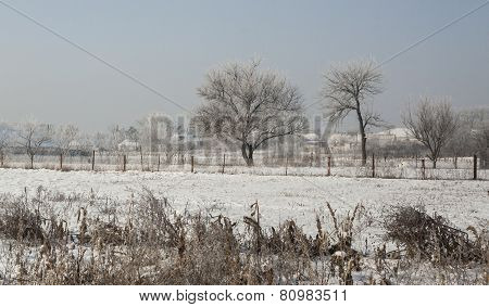 Frost Covered Landscape