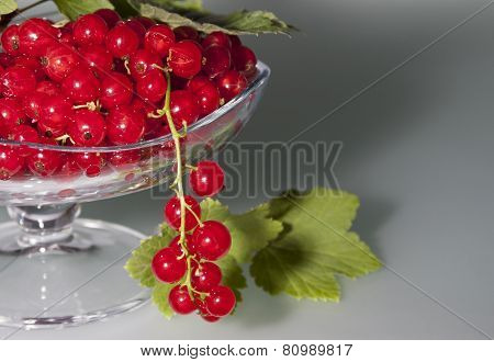 Red Currant On A Gray Background In A Vase And One Bunch Of Currants Hanging    .