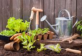stock photo of humus  - Seedlings of lettuce with gardening tools outside the potting shed - JPG