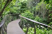 image of tree snake  - Kirstenbosch Centenary Tree Canopy Walkway called the Boomslang  - JPG