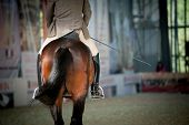 stock photo of horse-riders  - rider on a horse close up back view - JPG