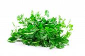 image of chinese parsley  - Bunch of parsley on a white - JPG