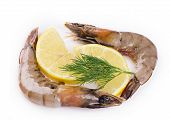 pic of white-tiger  - Raw tiger shrimps on white - JPG