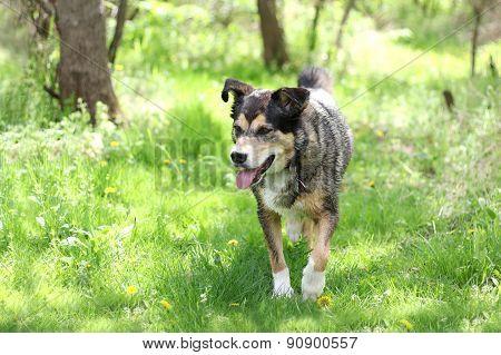 Wet Dog Walking Through Woods