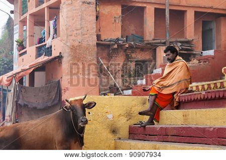 Indian Sadhu With The Sacred Cow On The Steps Of The Kshameshwar Ghat In Varanasi