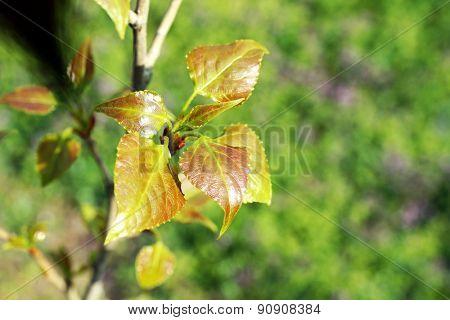 Beautiful green twigs close up