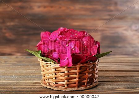 Beautiful pink hydrangea flowers on wooden background