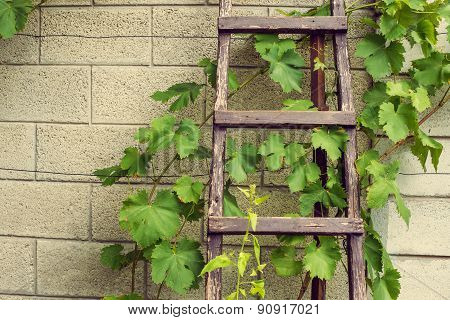 Stepladder laying above the wall in vineyard