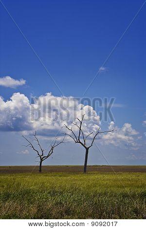 Dead Trees & Marsh, Gulf Coast