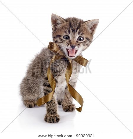 The Striped Mewing Kitten With A Bow.
