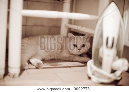 Cat Lying Under Chair Behind Iron On Floor Looking