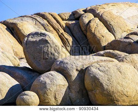 Joshua Tree With Rocks In Joshua Tree National Park