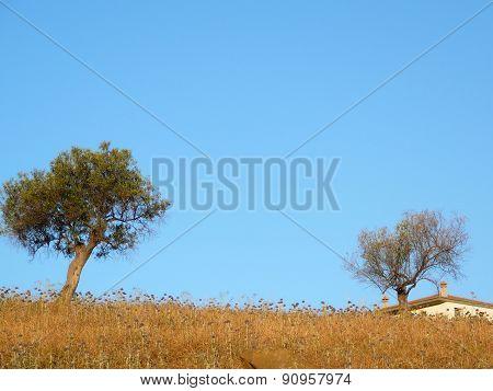 Two Trees In Field
