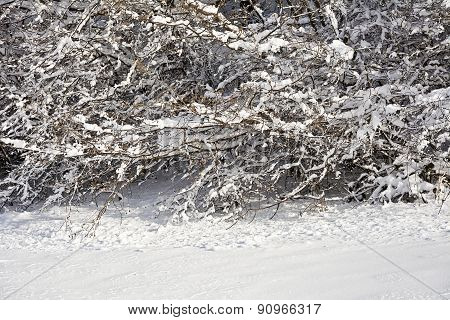 Snow covered branches of trees and bushes on a sunny day