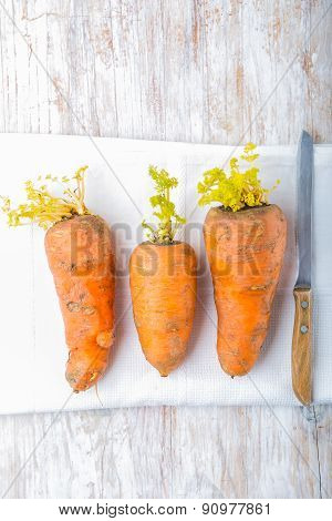 Old Germinating Carrots On A White Wood