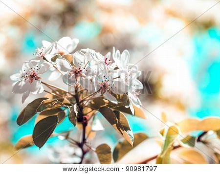 Spring flowering garden.