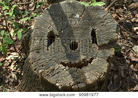 Old Tree Stump As A Smiley Face.