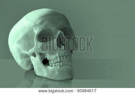 Artificial human skull.