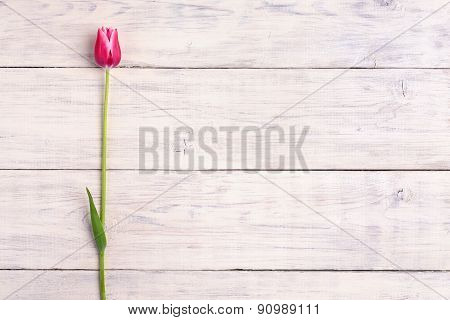 Pink Tulip Flower On Wooden Background. Top View, Copy Space.