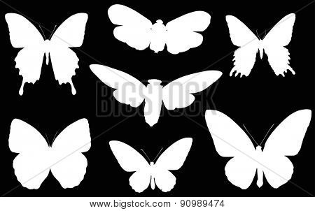 illustration with butterfly silhouettes collection isolated on black background