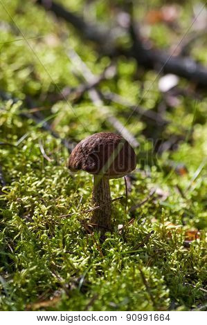 Mushroom In The Green Grass A Sunny Autumn Day