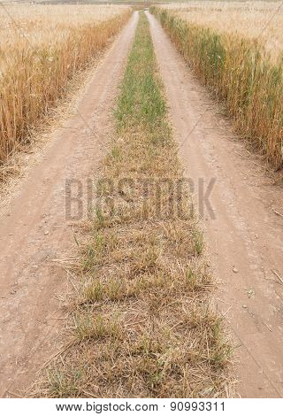 Straight Directive Country Road Through A Wheat Field
