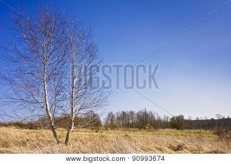 Landscape with trees on the background of serene blue sky