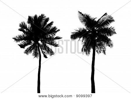 Silhouette Of Palms