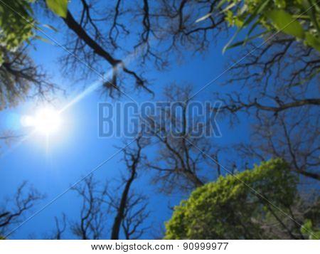 Defocused And Blurred Image Of Spring Trees