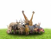 pic of herbivore animal  - group of africa animals with green grass on white background - JPG