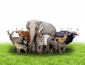 picture of herbivore animal  - group of asia animals with fresh green grass on white background - JPG