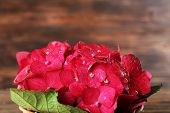 picture of hydrangea  - Beautiful pink hydrangea flowers on wooden background - JPG