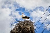 picture of stork  - White stork in his nest full of sparrows on cloudy blue sky closeup - JPG