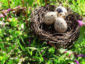 image of bird egg  - Nest with bird eggs over flowers background - JPG