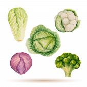 stock photo of water cabbage  - Set of watercolor vegetables cabbage broccoli lettuce cauliflower - JPG