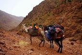 stock photo of donkey  - A pair of moroccan donkeys of white and braun resting with their carriage on the adventurous journey in rocky desert mountains having their heads turned to the valley maybe slightly overloaded - JPG